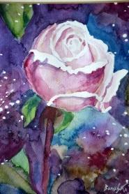 róża 1 1