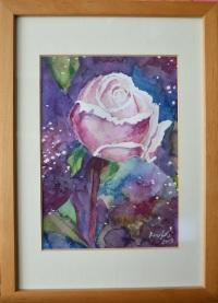 róża 1 1200