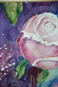róża 1 2