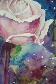 róża 1 3