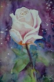 róża 2 1