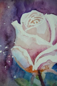 róża 2 2