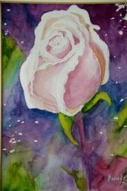 róża 3 1