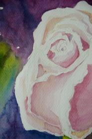 róża 3 2