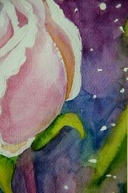 róża 3 3