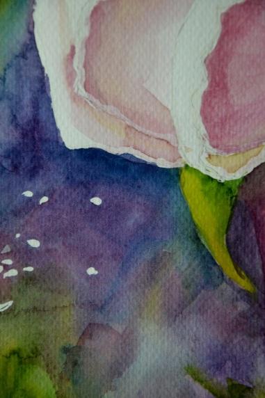 róża 3 5